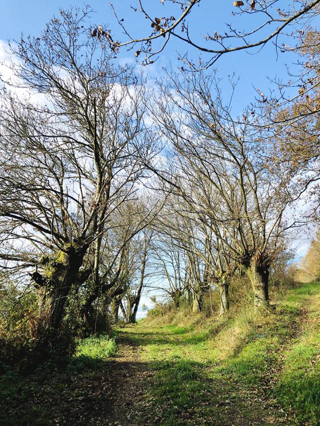 Galicia Natural y Rural